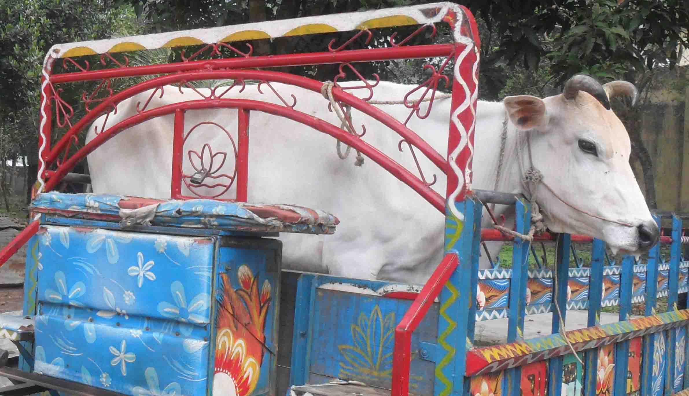 সোনাতলায় চোরাই গরু উদ্ধারঃ ভ্রাম্যমান আদালতে চোরের ১ বৎসরের কারাদন্ড